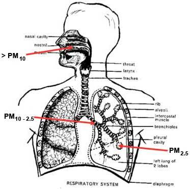 Classification of Matter Activity: Particle Diagram Maze ...  Particulate Matter Diagram